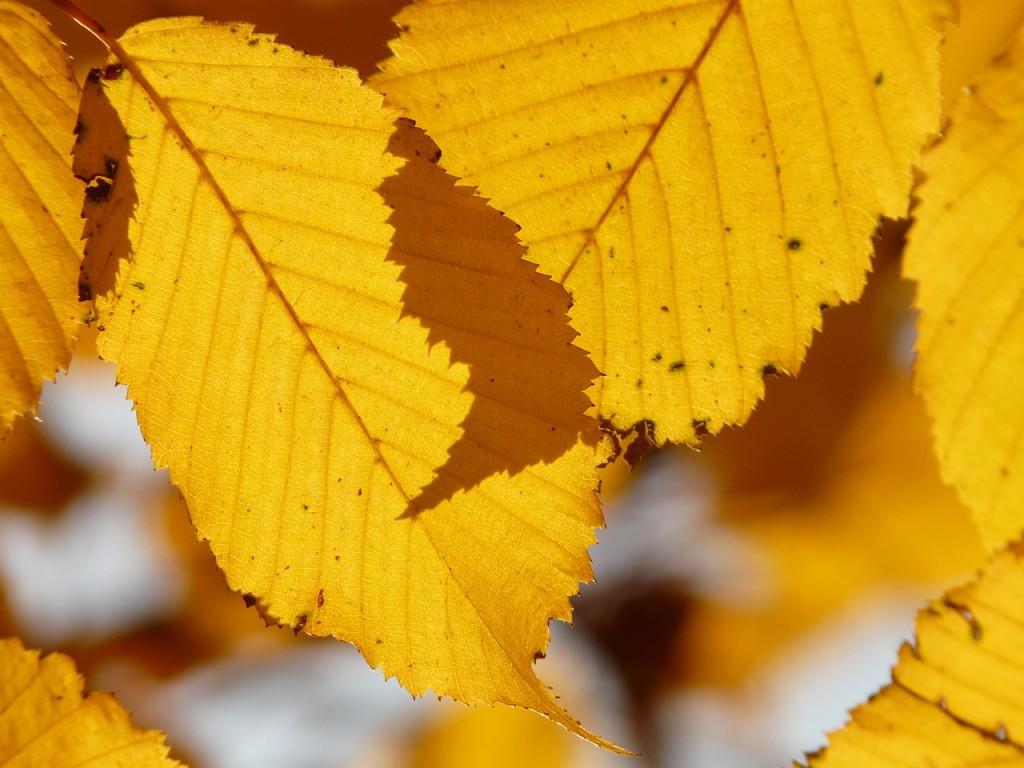 leaf-10787_1280