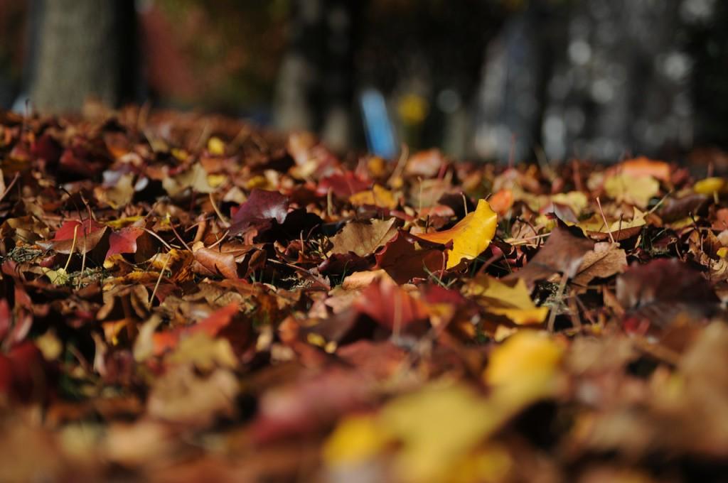 leaves-101329_1280