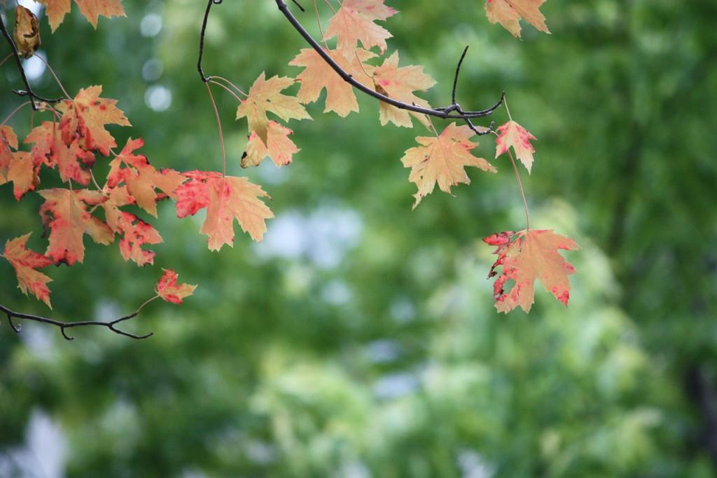 leaves-178669_1280